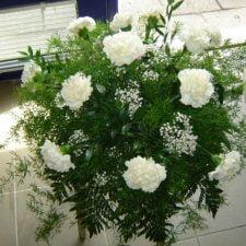 kwiaty014