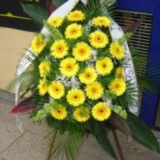 kwiaty034
